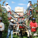 Migrant worker rights in NZ, time to set the record straight