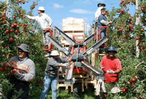 Migrant worker rights in NZ, time to set the record straight 3
