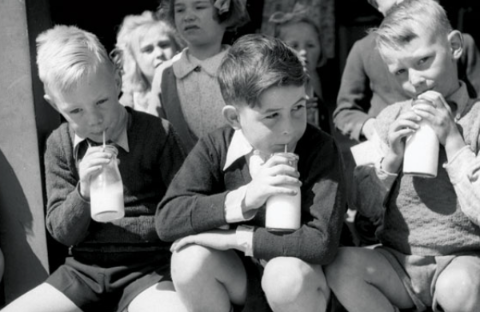 No Milk Licence Today - Wellington Lawyer Soured Over Milk Law 9